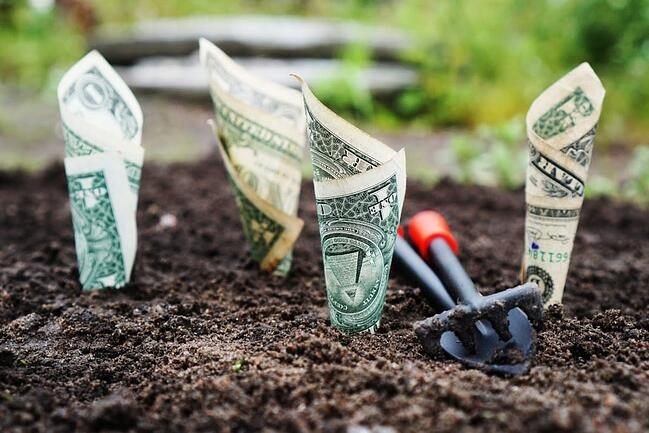 Doller bills planted in soil